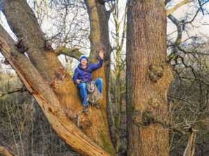 Yorkshire adventurer announces woodland appeal from the treetops